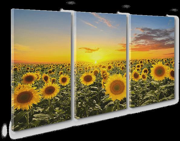 Multi-Panel Split Canvas